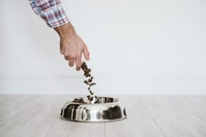 the right food and water bowls