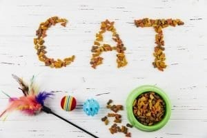 Choosing the right food for your cat