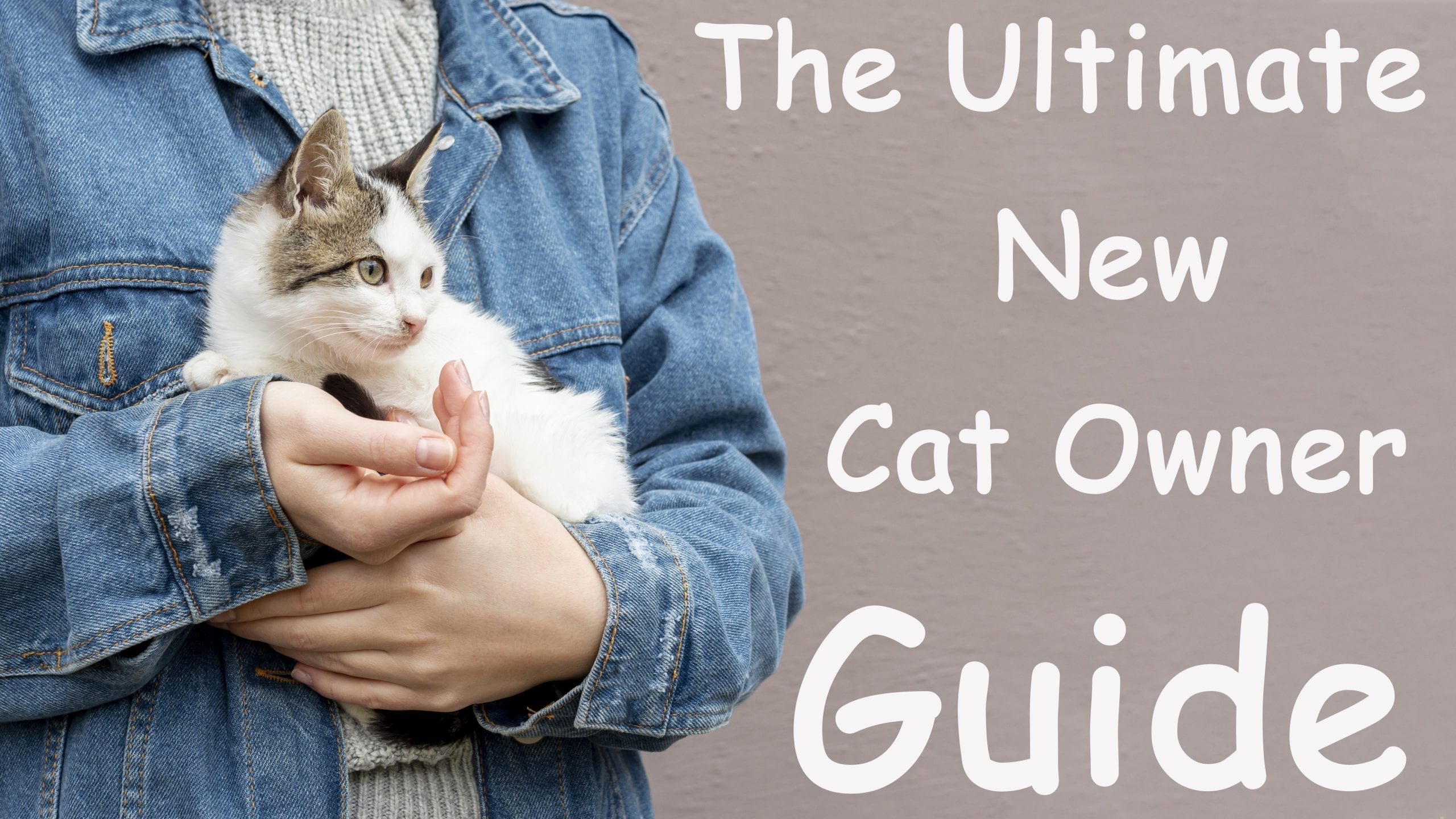 New Cat Owner Guide