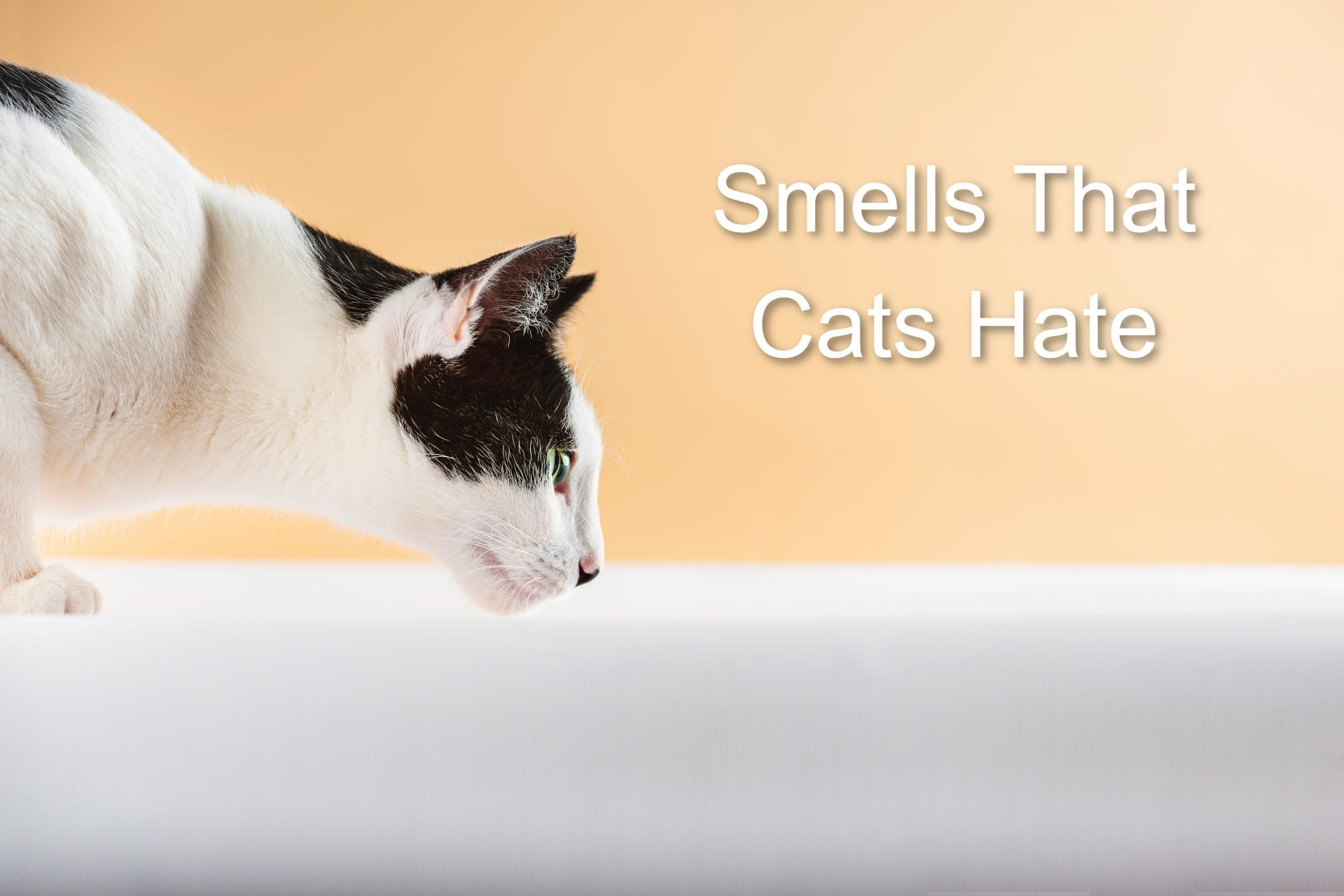 Smells That Cats Hate