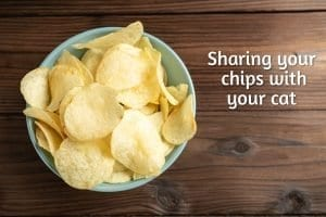 sharing your chips with your cat