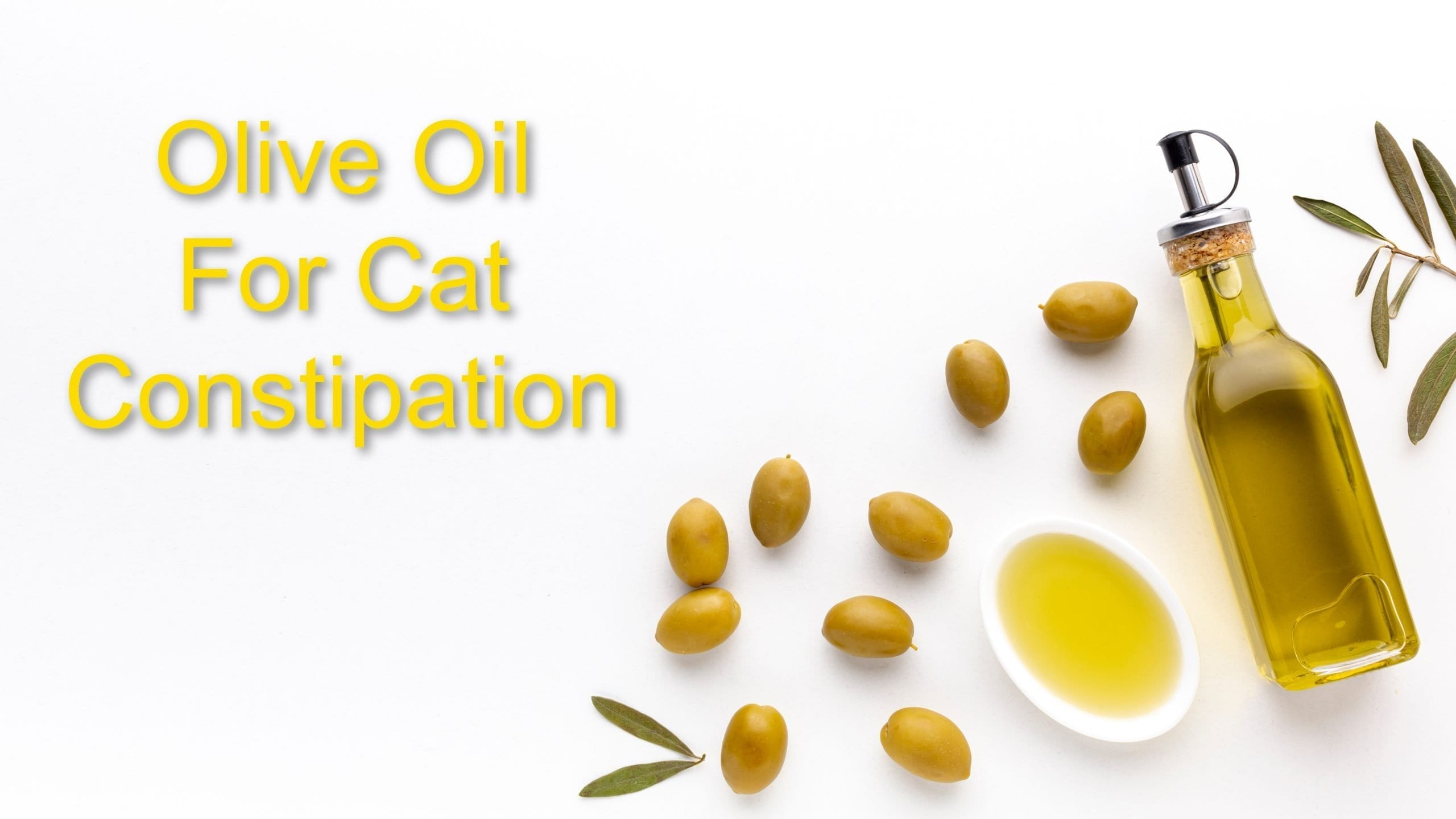 Olive Oil For Cat Constipation