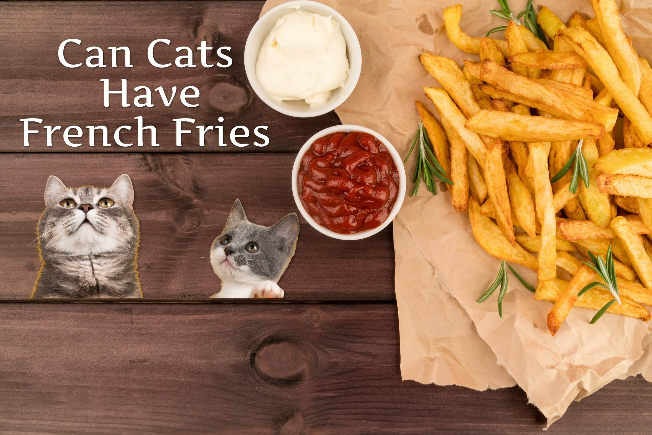 Can Cats Have French Fries