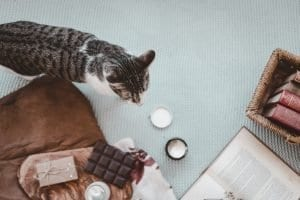 Foods that your cat should NOT eat
