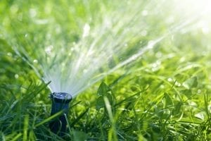 sprinklers to keep raccoons away from your garden