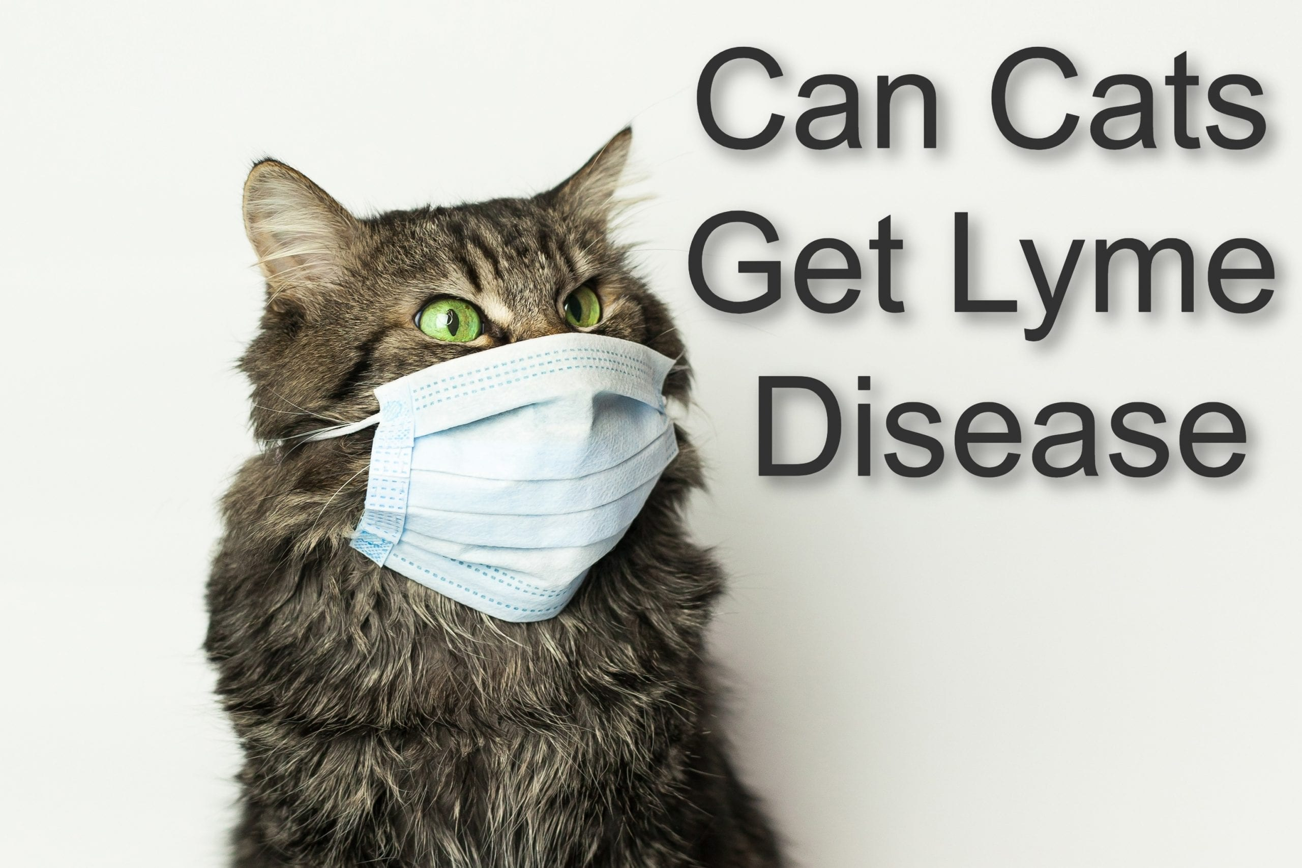 Can Cats Get Lyme Disease