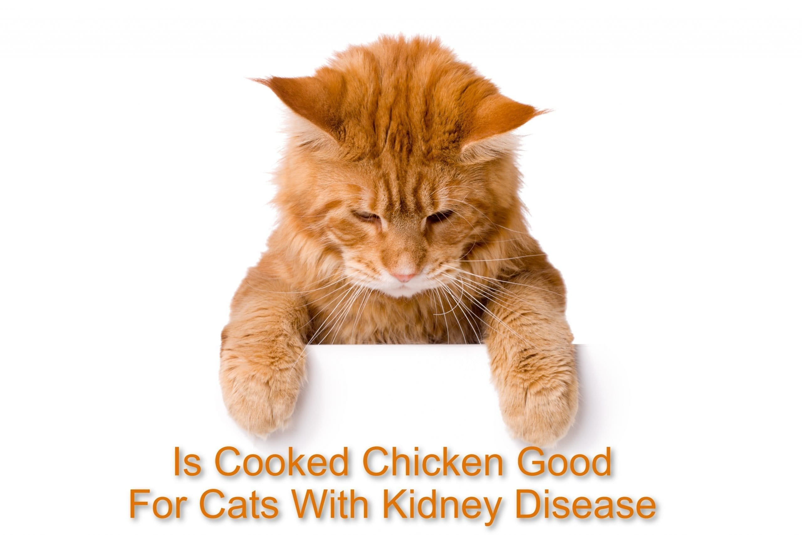 Is Cooked Chicken Good For Cats With Kidney Disease