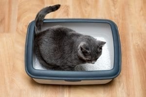 how long would food stay in your cat's stomach