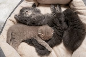 Female cat giving birth to more than one breed