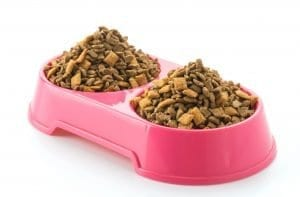 Wet Vs. Dry cat food for bowel movement