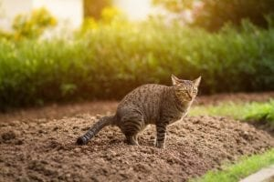 knowing if your cat's poop is healthy or not