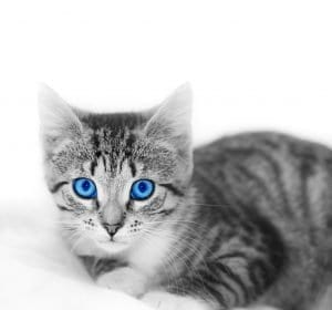 Genetic mutation and cat's ears