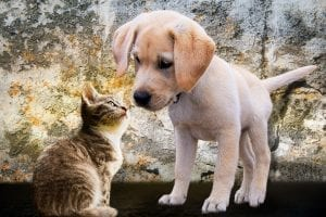 giving your cat dog treats