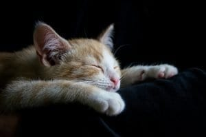 cats purr loud while sleeping